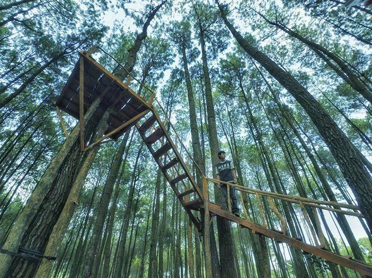 Hutan Forks Alias Hutan Pinus Imogiri Bantul Yang Membuat Kita Ketagihan Untuk Berkunjung