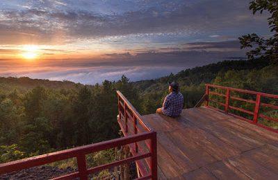 "Baru ! Gardu Pandang Pinus Asri Ala ""Hutan Pacific Northwest"" Bantul Yogyakarta"