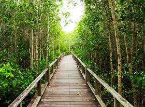hutan magrov