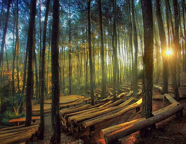 Hutan Forks Alias Hutan Pinus Imogiri Bantul yang Membuat Kita Ketagihan