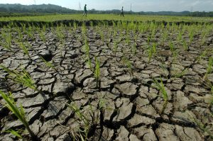15 Hektare Lahan di 3 Kecamatan Kekurangan Air