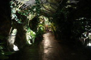 Ingin Rasakan Sensasi Makan di Hutan? Coba JC Forest di JCM