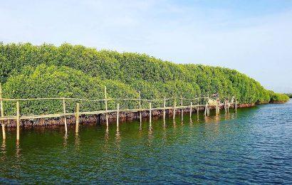 Libur Tahun Baru, Kalibiru dan Hutan Mangrove Kulonprogo Dibanjiri Wisatawan